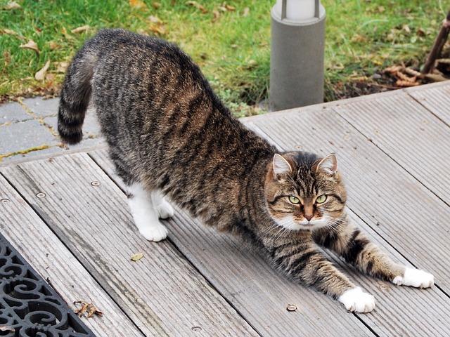 yoga, katten zijn er meester in