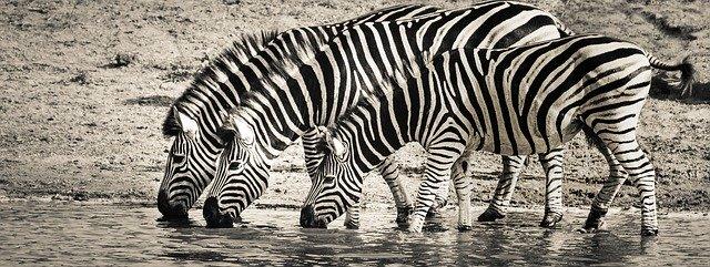 Zebrabedrijven zijn de toekomst!