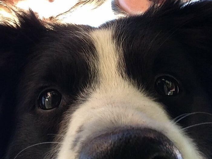 Toffe selfie van Frodo, de hond van Mieke